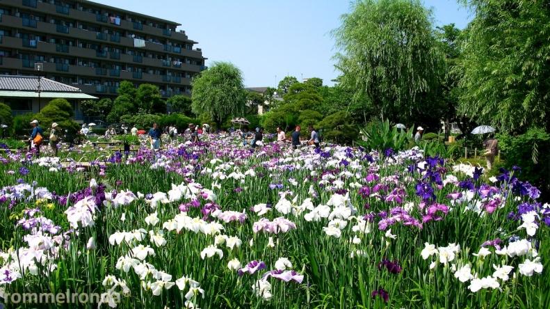 Horikiri Shobuen Garden, Katsushika-ku, Tokyo (June 2010)