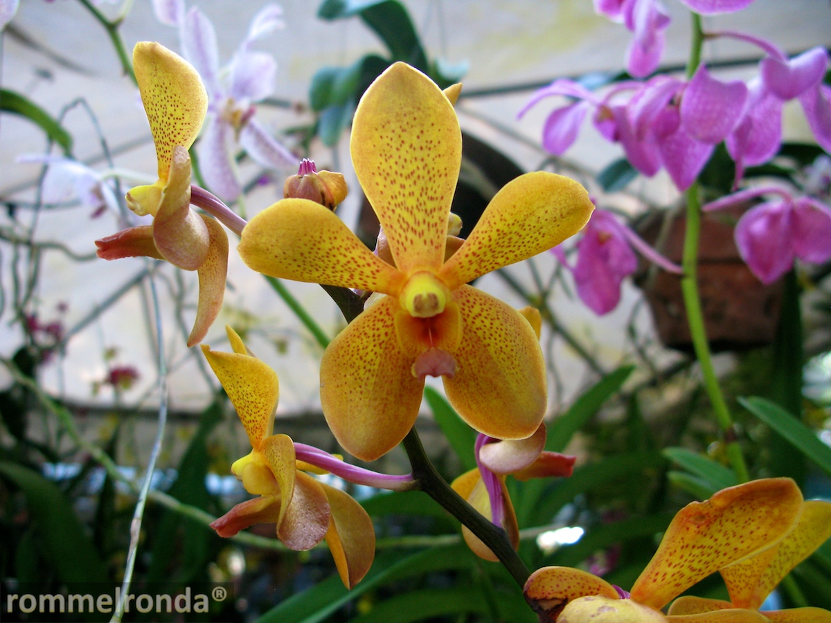 http://photobento.files.wordpress.com/2012/03/vanda-009.jpg
