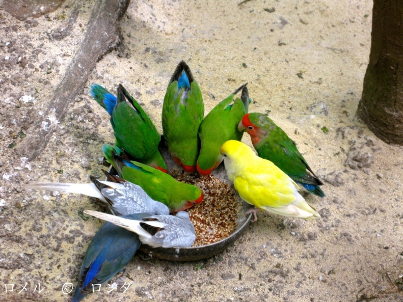 RICA Pets
