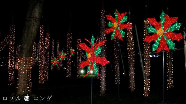 Christmas 2011 001