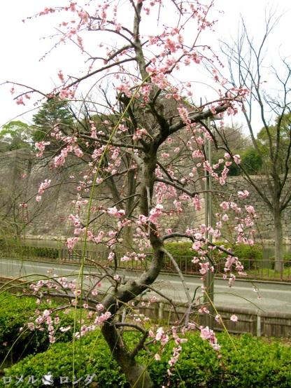 Osaka Castle 009