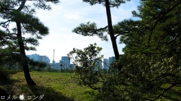 Tokyo Imperial Palace 004