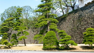 Tokyo Imperial Palace 010