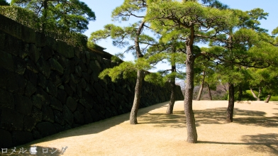 Tokyo Imperial Palace 028