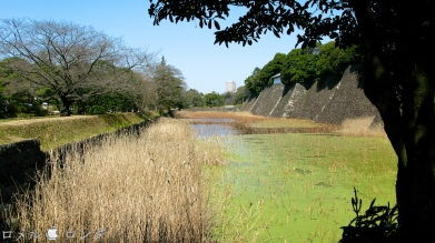 Tokyo Imperial Palace 034
