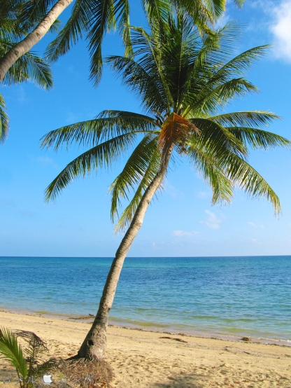 Coco Verde Beach 018