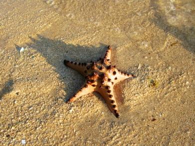 Coco Verde Beach 020