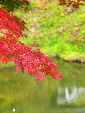 Shirakawa Sekinomori Park 020