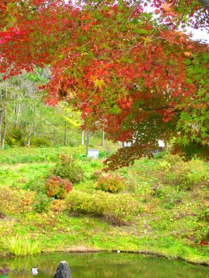 Shirakawa Sekinomori Park 021