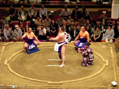 Sumo11